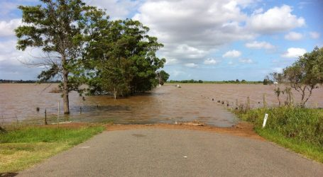 Iz poplave u Nizozemskoj spašena krava, vodena bujica odnijela je čak sto kilometara daleko od farme