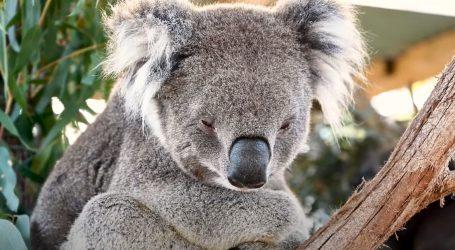 Pokrenut projekt pošumljavanja i vraćanja životinja u australsku divljinu