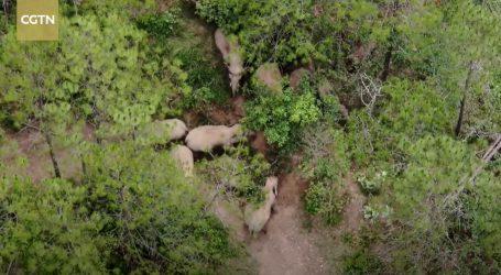Junnan: Azijski slonovi prošli ispod državne autoceste
