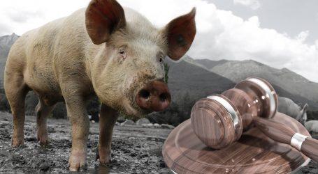 FELJTON: Povijesni apsurdi – kako se sudilo svinjama i skakavcima