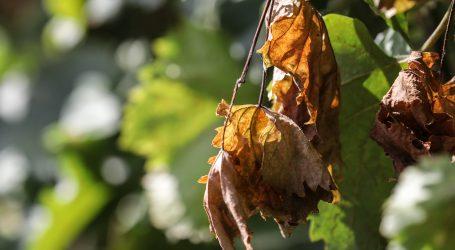 Proglašena prirodna nepogoda za Čazmu i šest općina