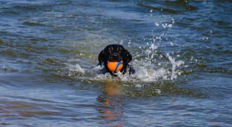 Viralni hit: Labradorica Jane obožava plivanje, baš kao i njen vlasnik – najuspješniji sportaš iz Tokija
