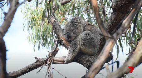 Australija: U Novom Južnom Walesu uvode najvišu zakonsku zaštitu životinja i prirode