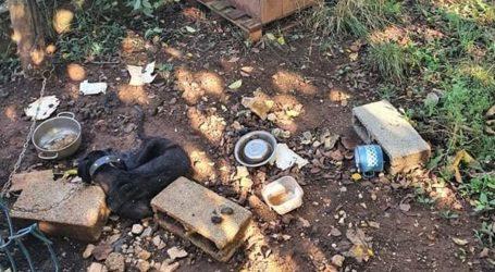 Strava u Istri: Pas je mjesecima umirao od gladi na lancu, smrt je stizala polako