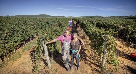 EKSKLUZIVNI PODRUM U CENTRU ROVINJA: Čarobno rovinjsko vino koje se prodaje i u Americi