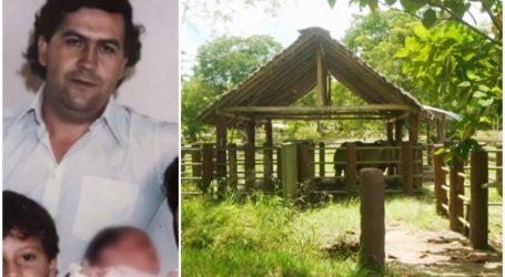 """Borci za životinje u lovu na ljubimce narkobosa Pabla Escobara: """"Predstavljaju opasnost za ljude, nema drugog rješenja"""""""