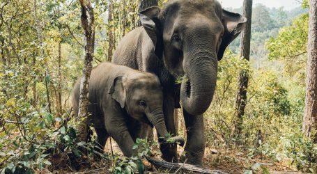 Svjetski dan zaštite životinja upozorava na važnost brige o njima