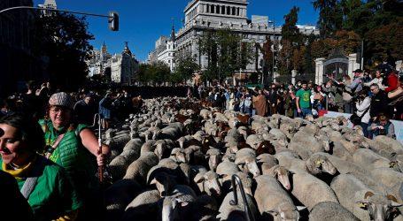 Tradicija u Španjolskoj: Dan kada automobile na madridskim ulicama zamijene stada ovaca