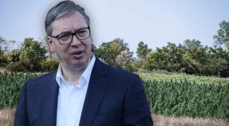 Zašto je Vučić stao u obranu vlasnika najveće ilegalne farme u Europi sa 66.000 stabljika marihuane
